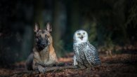 گالری عکس: کبوتر با کبوتر سگ با جغد!